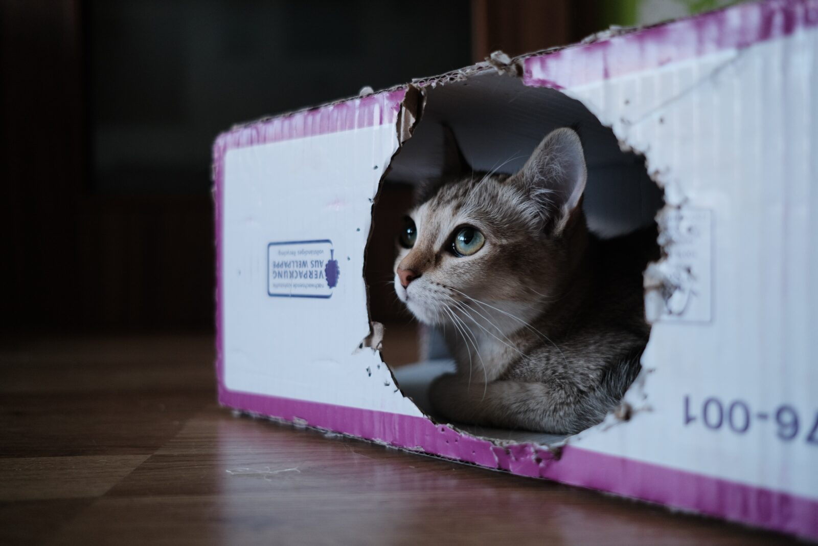 Moving Me   MOVING WITH YOUR PETS   Moving Hacks